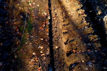 zniszczonyt las